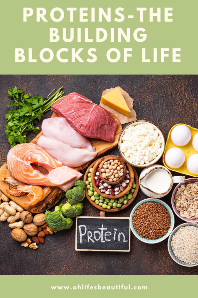 Sources of protein, protein rich foods